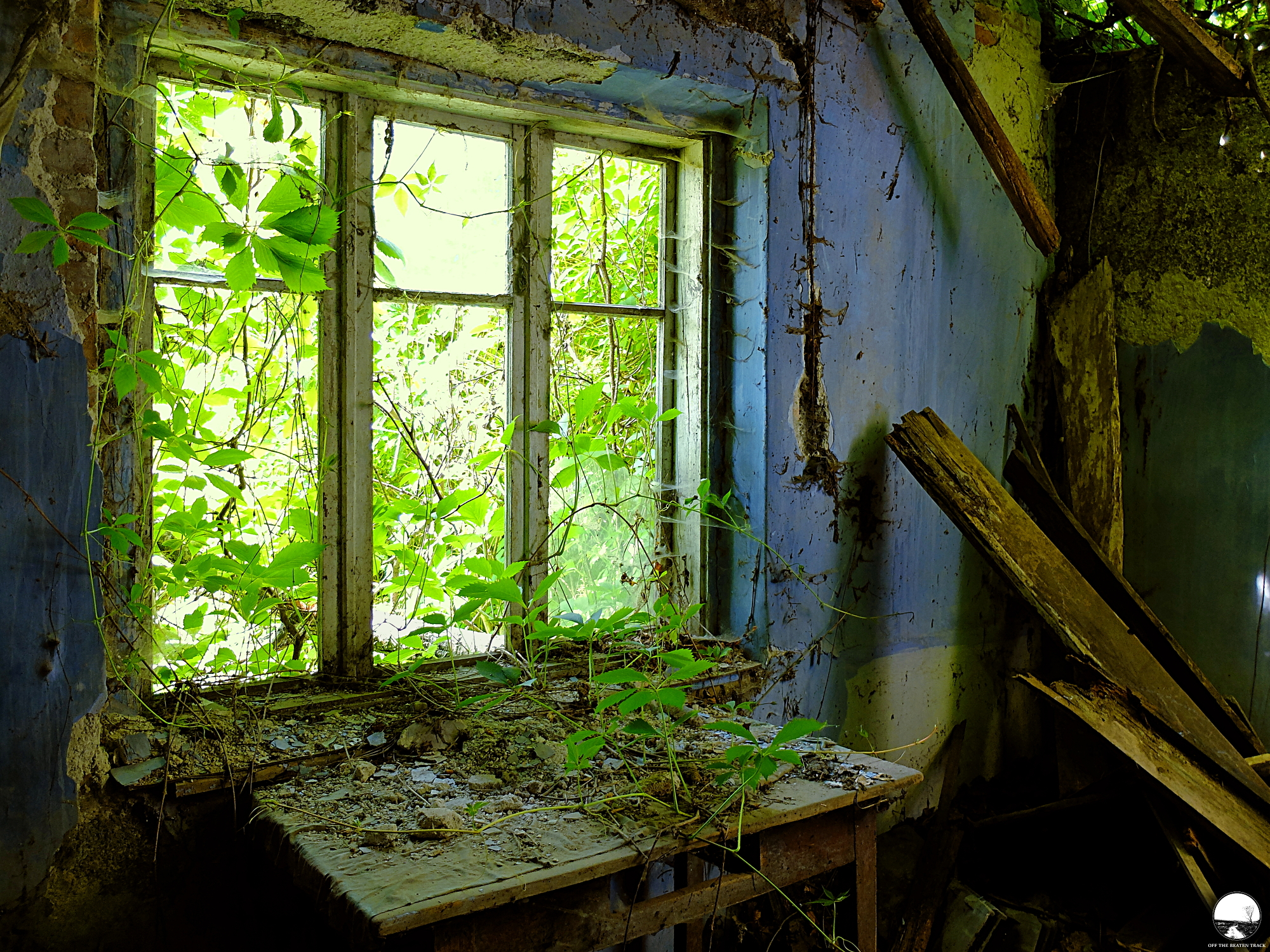 The Abandoned House 'What the Vines Are Hiding' (Poland) - 15