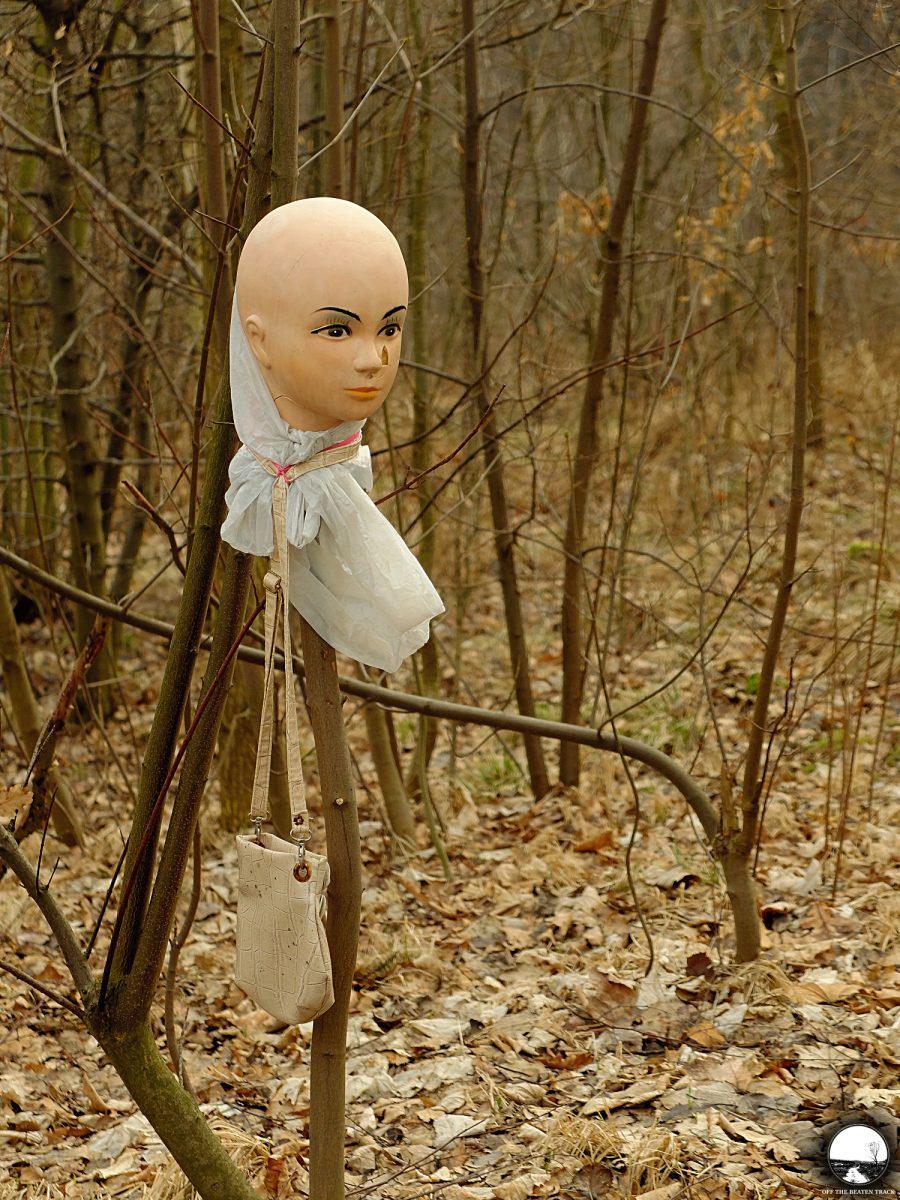 a head on the branch a weird find in the forest hucisko poland off the beaten track. Black Bedroom Furniture Sets. Home Design Ideas